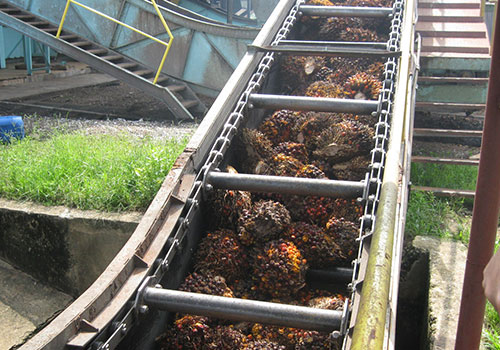 Palm Oil Mill Chain